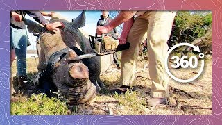 Download Veterinary Rhino Dehorning Procedure | Wildlife Protection Solutions Video