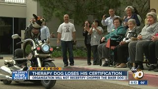 Download Therapy dog loses his certification over what he wears Video