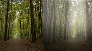 Download Foggy effect: Create Fog in a forest Video