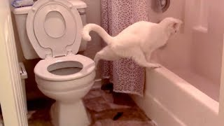 Download LAUGH HARDER than EVER BEFORE! - Super FUNNY & WEIRD ANIMALS Video