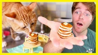 Download MAKING TINY FOOD FOR MY CAT! Video