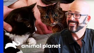 Download Jackson Galaxy Makes A Massive Difference In the Lives Of These Cats | My Cat From Hell Video