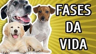 Download 11 FASES DA VIDA DE UM CACHORRO Video