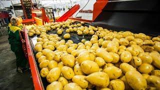 Download CRAZY FOOD PROCESSING MACHINES 2018 | POTATO Video