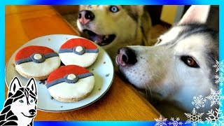 Download DIY POKEBALL DOG TREATS | Snow Dogs Snacks 59 | DIY Dog Treats Video