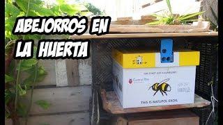 Download Como Instalar una Colmena de Abejorros | Polinizadores Naturales | La Huerta de Ivan Video