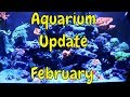 Download Reef Tank Update Video