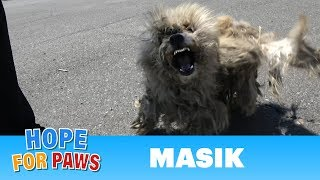 Download Homeless dog fights us even though he was badly injured! Video