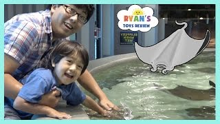 Download Stingray Feeding for Kids at the Aquarium Family Fun activities for Children and Toddlers Kids Video Video