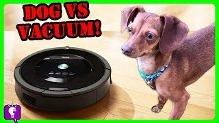 Download DOG vs VACUUM: HobbyFlappy Competes the Roomba! Who Is Better At Cleaning? Challenge by HobbyKidsTV Video