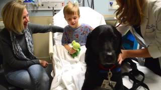 Download A Day in the Life of Fraser : A Pet Therapy Dog Video