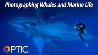 Download Optic 2016: Photographing Whales and Marine Life with Flip Nicklin Video