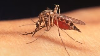 Download Human Health, Vector-Borne Diseases, and Climate Change Video