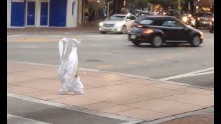 Download Bag Going For A Walk Video