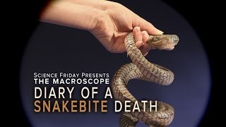 Download Diary of A Snakebite Death Video
