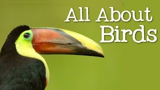 Download All About Birds for Children: Animal Learning for Kids - FreeSchool Video