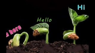 Download Secret Language Of Plants National Geographic Documentary HD Video