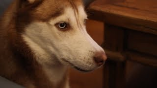 Download Laika Sings With Mishka! Video