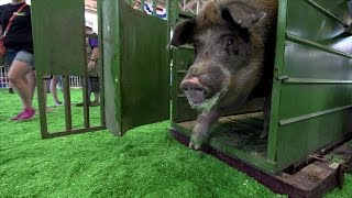 Download Big Animals Video