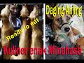 Download Dog meat on proces Video
