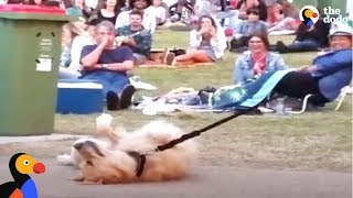 Download Dog PLAYS DEAD to Avoid Going Home While Park Crowd Watches | The Dodo Video