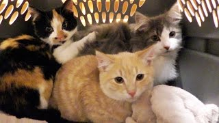 Download NEW Kittens! Video