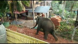 Download Elephant Attack In Palakkad, Kerala, India Video