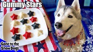 Download 4th of July Gummy Dog Treats Fruit Stars | DIY Dog Treats Recipe 103 Video