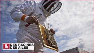 Download Ouessant : le paradis des abeilles ? Video
