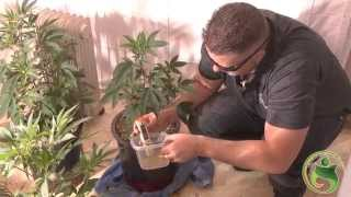 Download Checking Nutrient Lockout : Patient Grow Room Video