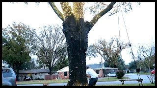 Download THE TREE BLEW A FUSE!! Video