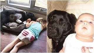 Download A baby girl and a black dog grew together to be inseparable friends Video