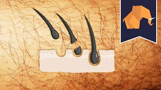 Download Does hair grow back THICKER if you shave or pluck? Video