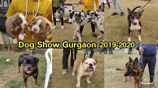 Download Dog Show Gurgaon 2020    KENNEL CLUB OF INDIA    GURUGRAM KENNEL CLUB Video