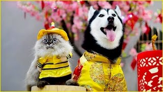 Download Do Chinese People EAT Their Pets? Video