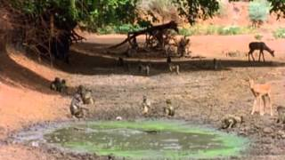 Download Last Feast of The Crocodiles - National Geographic Video