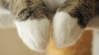 Download 意外と器用な前足とねこ。-Skillful forefoot of Maru.- Video