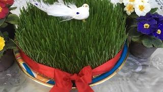 Download SƏMƏNİ. Səməninin cücərdilməsi prosesi. СЕМЕНИ Как прорастить пшеницу Video
