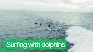 Download Dolphins Jump Alongside Surfer Off LA Coast Video