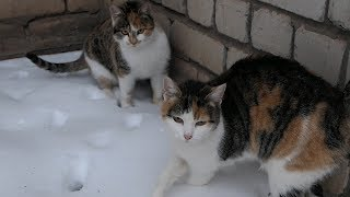 Download Two cats it's mom and daughter Video