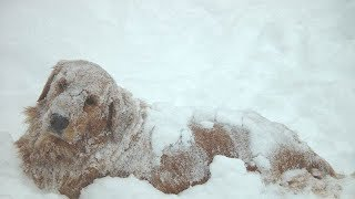 Download Rescuers Spot Dog In Freezing Cold, Then See He's Keeping Someone Else Warm Video
