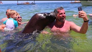 Download Sea Lion Plays With Tourists At The Beach Video