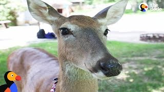 Download Sweetest Rescued Deer Helps Mom Overcome Cancer | The Dodo Video