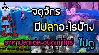 Download Four9: ราคาปลาสวยงาม @จตุจักร JJ (ฉบับเต็ม) Video