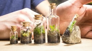 Download Making TINY Native Terrariums Video