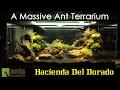 Download A MASSIVE ANT TERRARIUM ″Hacienda Del Dorado″ Video