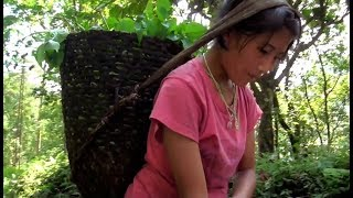 Download RURAL LIFE IN SIKKIM, INDIA .... Part - 1 Video