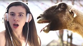 Download REACTING TO GOATS SCREAMING LIKE HUMANS!!! Video