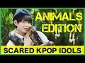 Download Scared K-Pop Idols: Animals Edition 1 Video