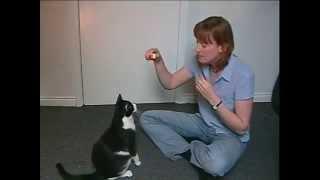 Download Toilet Train Your Cat Video